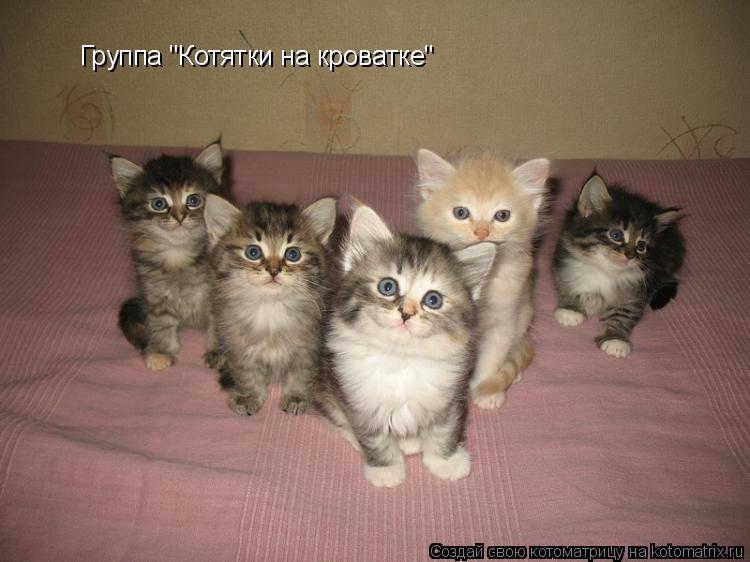 "Котоматрица: Группа ""Котятки на кроватке"""
