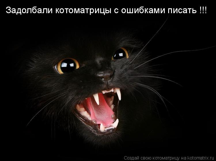 Котоматрица: Задолбали котоматрицы с ошибками писать !!!