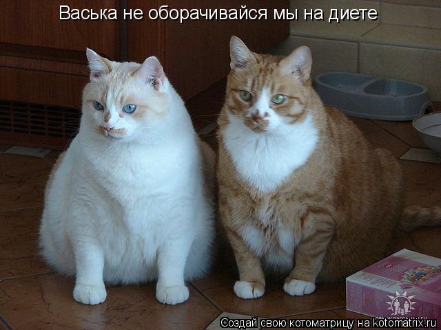 Котоматрица: Васька не оборачивайся мы на диете