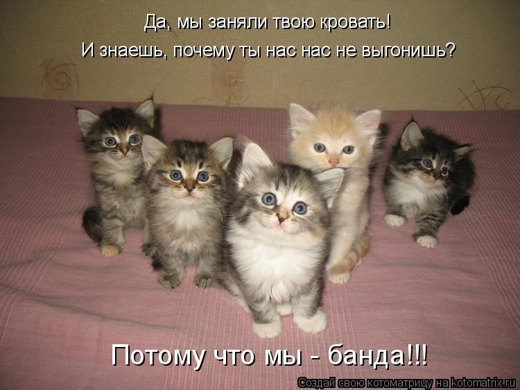 Котоматрица: Потому что мы - банда!!! Да, мы заняли твою кровать! И знаешь, почему ты нас нас не выгонишь?