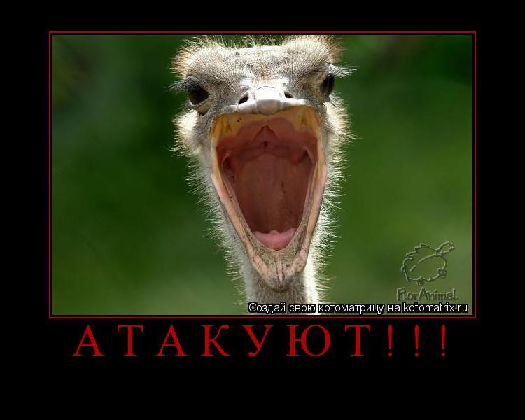 Котоматрица: Атакуют!!!