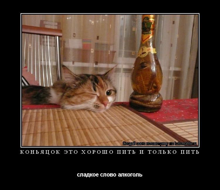 Котоматрица: коньяцок это хорошо пить и только пить сладкое слово алкоголь