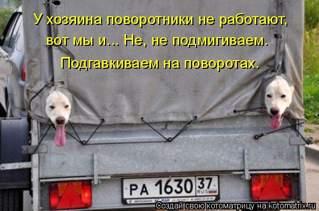 Котоматрица: У хозяина поворотники не работают,  вот мы и... Не, не подмигиваем. Подгавкиваем на поворотах.