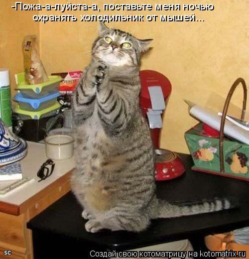 Котоматрица: -Пожа-а-луйста-а, поставьте меня ночью  охранять холодильник от мышей...