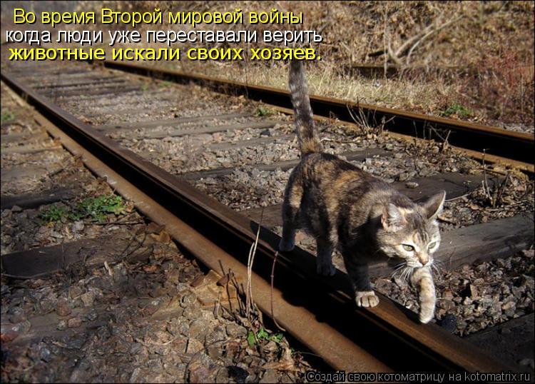 Котоматрица: Во время Второй мировой войны когда люди уже переставали верить животные искали своих хозяев.