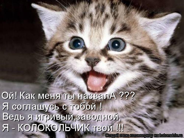 Котоматрица: Ой! Как меня ты назвалА ??? Я соглашусь с тобой ! Ведь я игривый,заводной, Я - КОЛОКОЛЬЧИК твой !!!