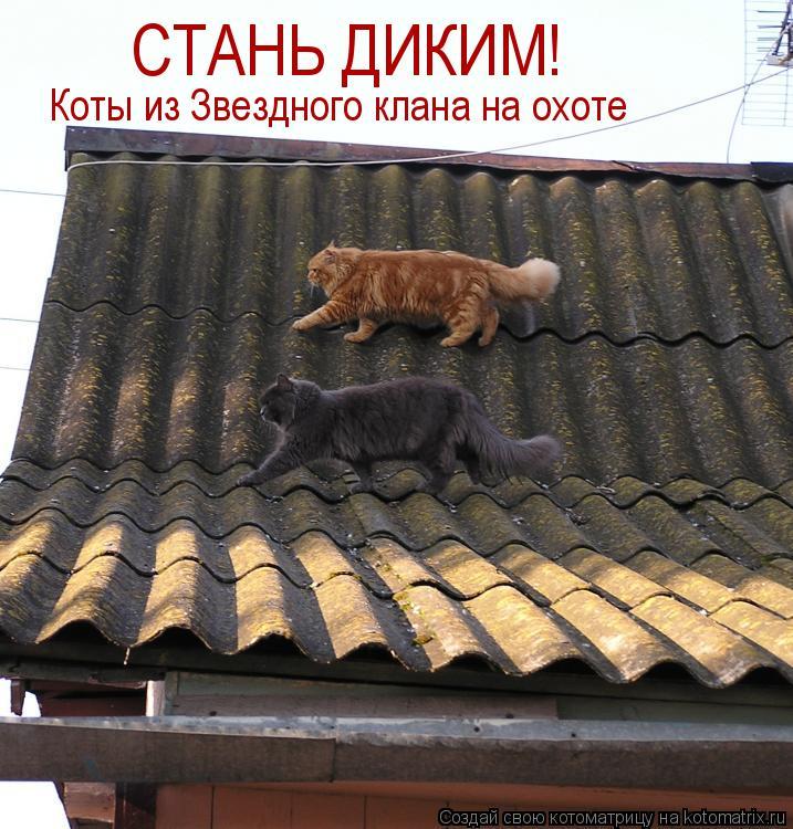 Котоматрица: СТАНЬ ДИКИМ! Коты из Звездного клана на охоте