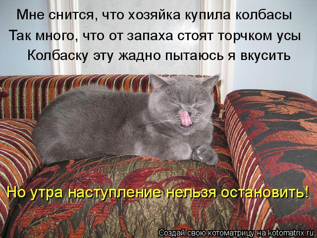 Котоматрица: Мне снится, что хозяйка купила колбасы Так много, что от запаха стоят торчком усы Колбаску эту жадно пытаюсь я вкусить Но утра наступление н