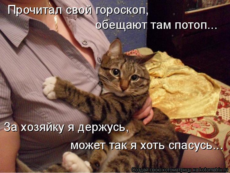 Котоматрица: Прочитал свой гороскоп, обещают там потоп... За хозяйку я держусь, может так я хоть спасусь...