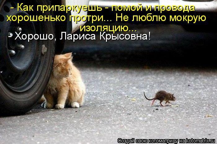 Котоматрица: - Как припаркуешь - помой и провода хорошенько протри... Не люблю мокрую изоляцию... - Хорошо, Лариса Крысовна!