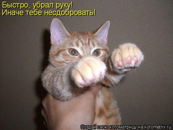 Котоматрица: Быстро, убрал руку! Иначе тебе несдобровать!