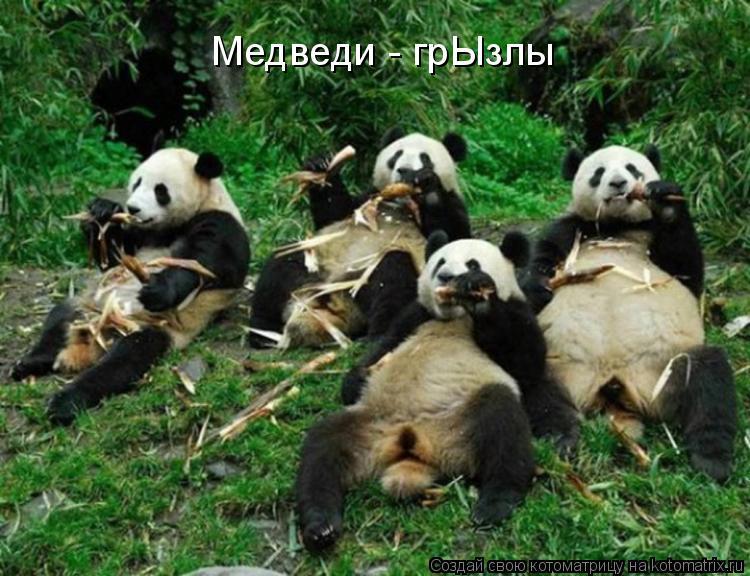 Котоматрица: Медведи - грЫзлы