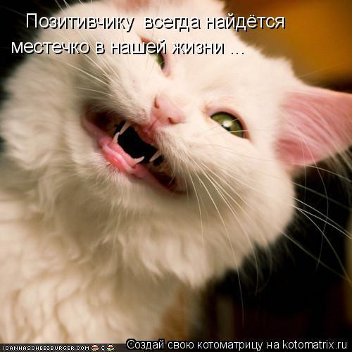 Котоматрица: Позитивчику  всегда найдётся  местечко в нашей жизни ...