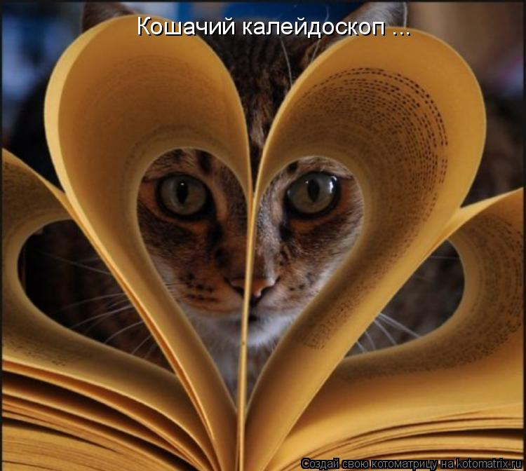 Котоматрица: Кошачий калейдоскоп ...