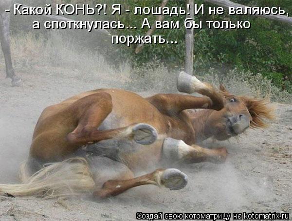 Котоматрица: - Какой КОНЬ?! Я - лошадь! И не валяюсь, а споткнулась... А вам бы только поржать...
