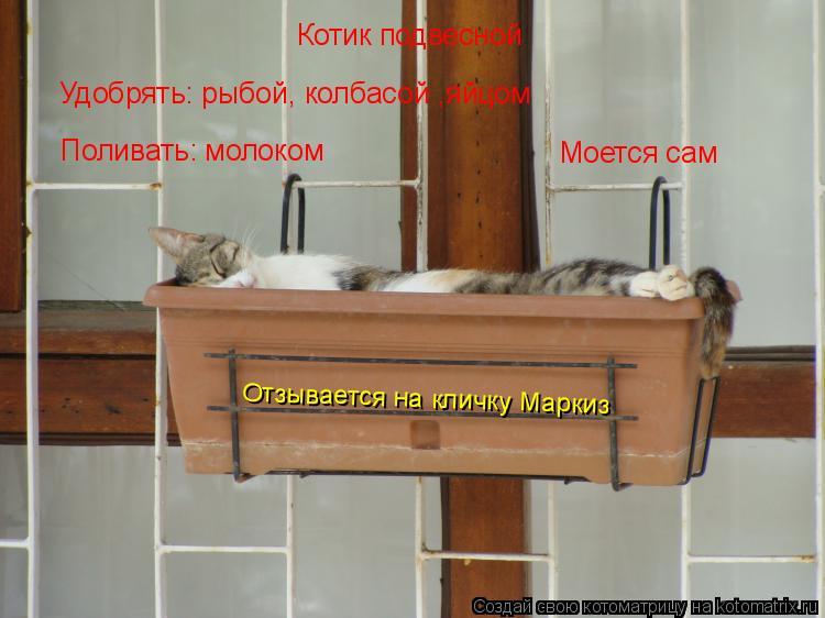 Котоматрица: Котик подвесной Удобрять: рыбой, колбасой ,яйцом Поливать: молоком Моется сам Отзывается на кличку Маркиз
