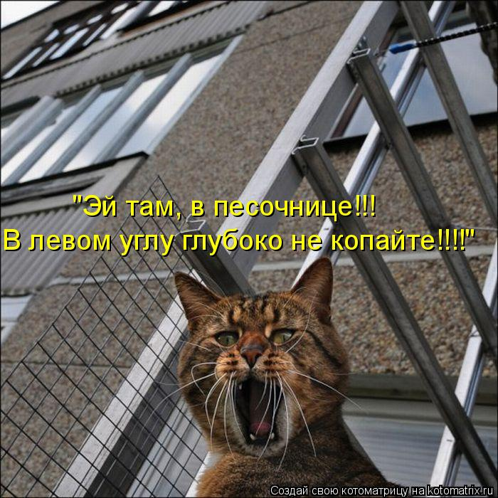 Котоматрица - В левом углу глубоко не копайте!!!!