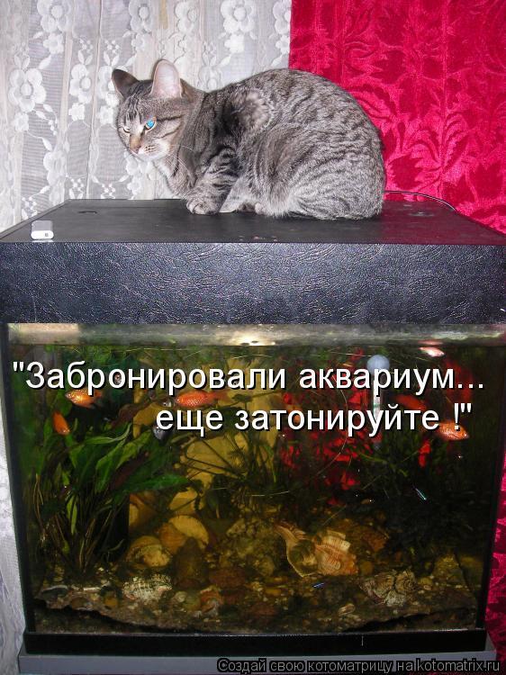 """Котоматрица: """"Забронировали аквариум... еще затонируйте !"""""""
