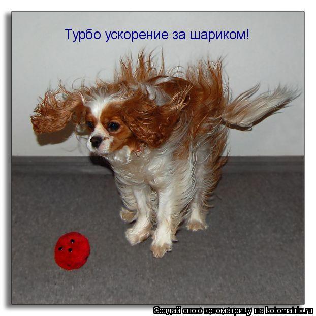 Котоматрица: Турбо ускорение за шариком!