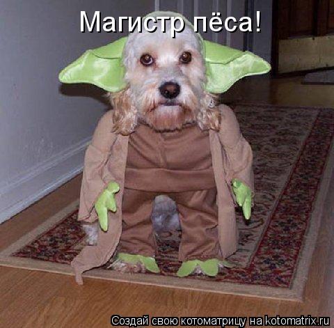 Котоматрица: Магистр пёса!
