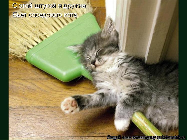 Котоматрица: С этой штукой я дружна Бьет соседского кота