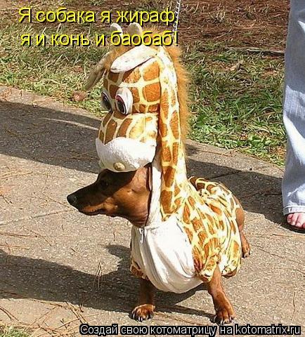 Котоматрица: Я собака я жираф,  я и конь и баобаб!
