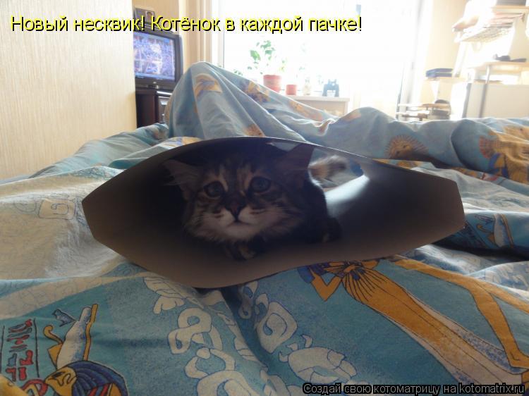 Котоматрица: Новый несквик! Котёнок в каждой пачке!