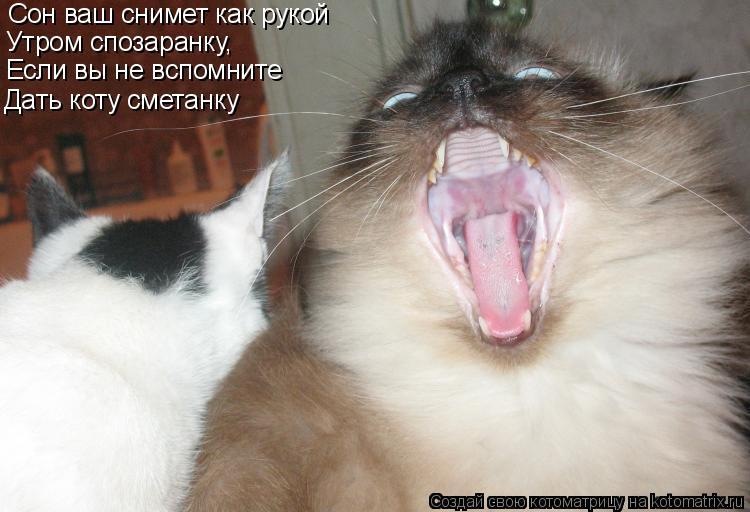 Котоматрица: Сон ваш снимет как рукой Утром спозаранку, Если вы не вспомните Дать коту сметанку