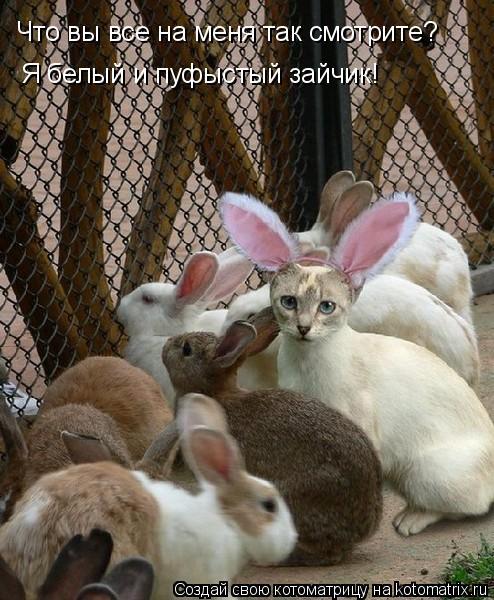 Котоматрица: Что вы все на меня так смотрите? Я белый и пуфыстый зайчик!
