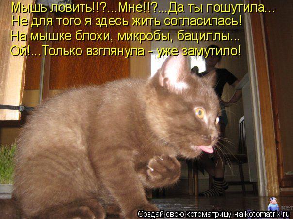 Котоматрица: Мышь ловить!!?...Мне!!?...Да ты пошутила... На мышке блохи, микробы, бациллы... Не для того я здесь жить согласилась! Ой!...Только взглянула - уже зам