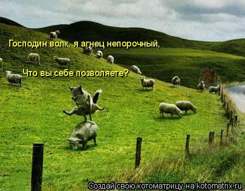 Котоматрица: Господин волк, я агнец непорочный, Что вы себе позволяете?