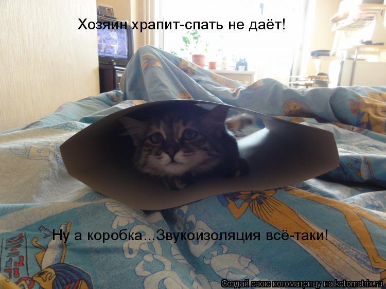 Котоматрица: Хозяин храпит-спать не даёт! Ну а коробка...Звукоизоляция всё-таки!