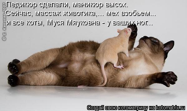 Котоматрица: Педикюр сделали, маникюр высох. Сейчас, массаж животика,... мех взобьем...  и все коты, Муся Мяуковна - у ваших ног...