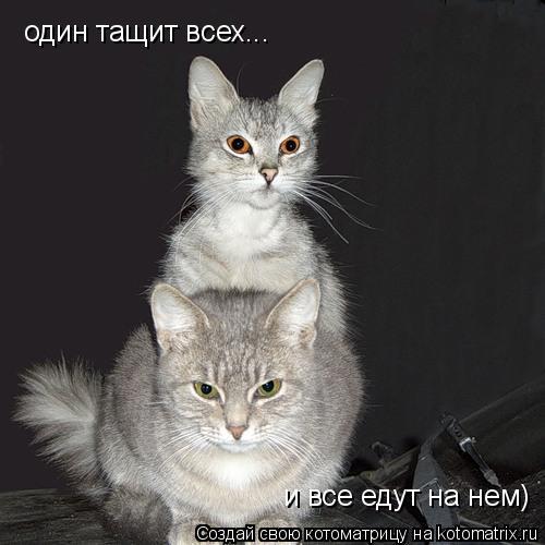 Котоматрица: один тащит всех... и все едут на нем)