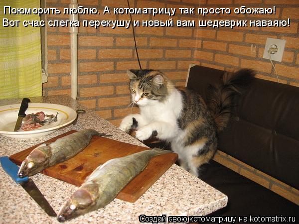 Котоматрица: Поюморить люблю. А котоматрицу так просто обожаю! Вот счас слегка перекушу и новый вам шедеврик наваяю!