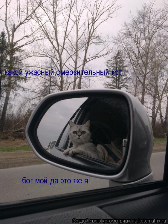 Котоматрица: какой ужасный,омерзительный кот...... ....бог мой,да это же я!