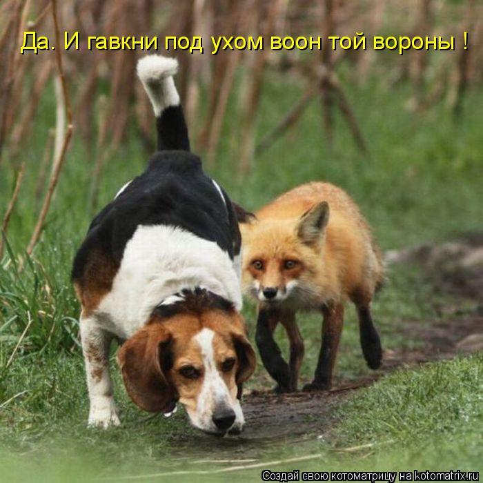 Котоматрица: Да. И гавкни под ухом воон той вороны !