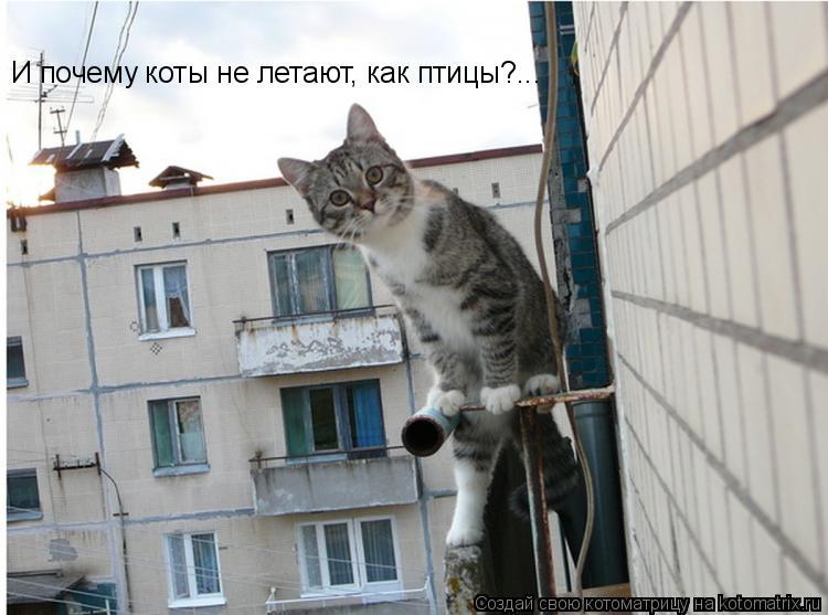 Котоматрица: И почему коты не летают, как птицы?...