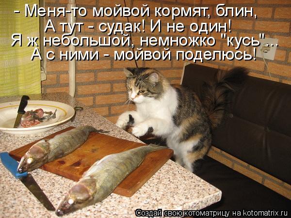 """Котоматрица: - Меня-то мойвой кормят, блин, А тут - судак! И не один! А с ними - мойвой поделюсь! Я ж небольшой, немножко """"кусь""""..."""
