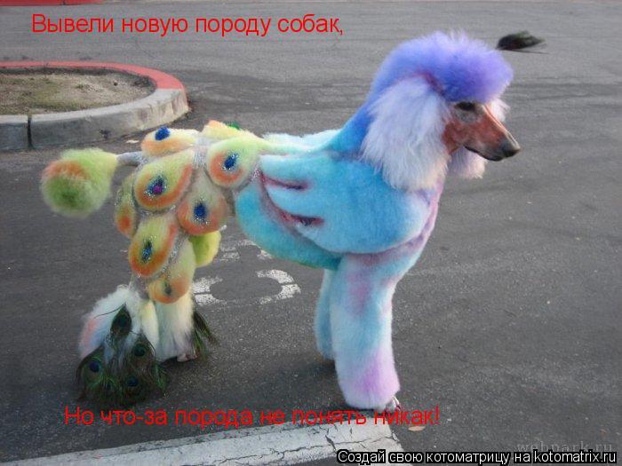 Котоматрица: Вывели новую породу собак, Но что-за порода не понять никак!