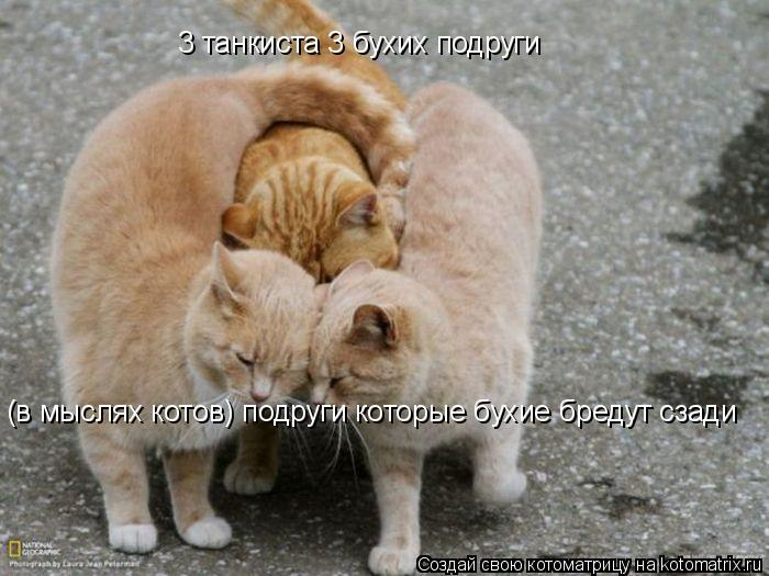 Котоматрица: 3 танкиста 3 бухих подруги  (в мыслях котов) подруги которые бухие бредут сзади (в мыслях котов) подруги которые бухие бредут сзади