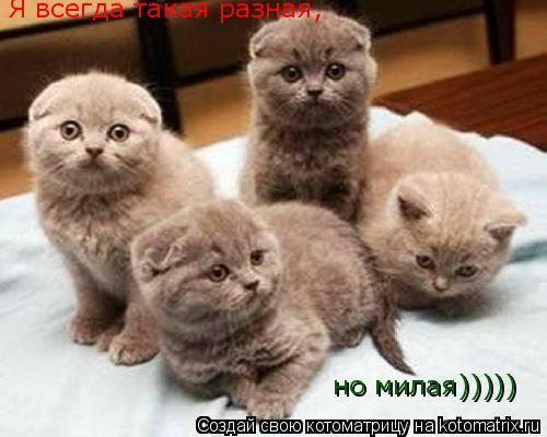 Котоматрица: Я всегда такая разная, но милая)))))