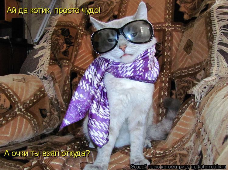 Котоматрица: Ай да котик, просто чудо! А очки ты взял откуда?