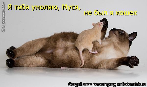 Котоматрица: Я тебя умоляю, Муся, не был я кошек