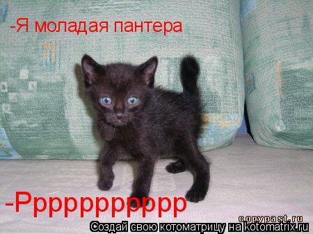Котоматрица: -Я моладая пантера -Ррррррррррр