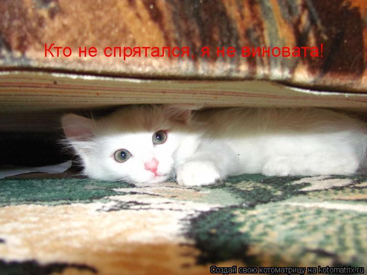 Котоматрица: Кто не спрятался, я не виновата!