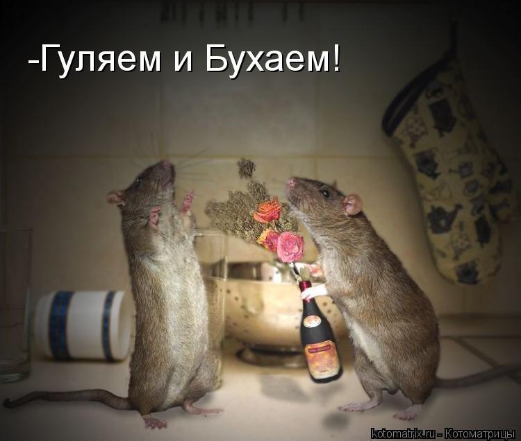 Котоматрица: -Гуляем и Бухаем!