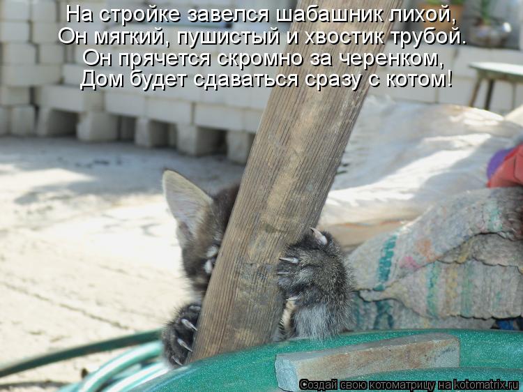 Котоматрица: На стройке завелся шабашник лихой, Он мягкий, пушистый и хвостик трубой. Он прячется скромно за черенком, Дом будет сдаваться сразу с котом!