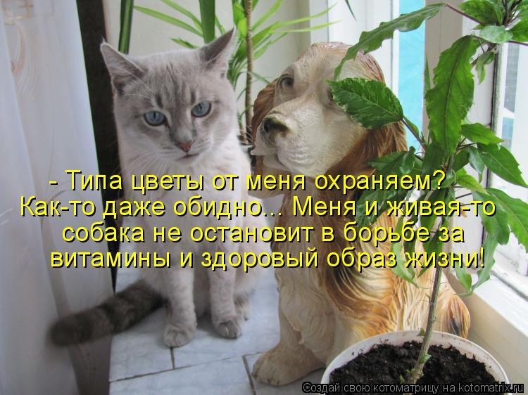 Котоматрица: - Типа цветы от меня охраняем? Как-то даже обидно... Меня и живая-то собака не остановит в борьбе за витамины и здоровый образ жизни!
