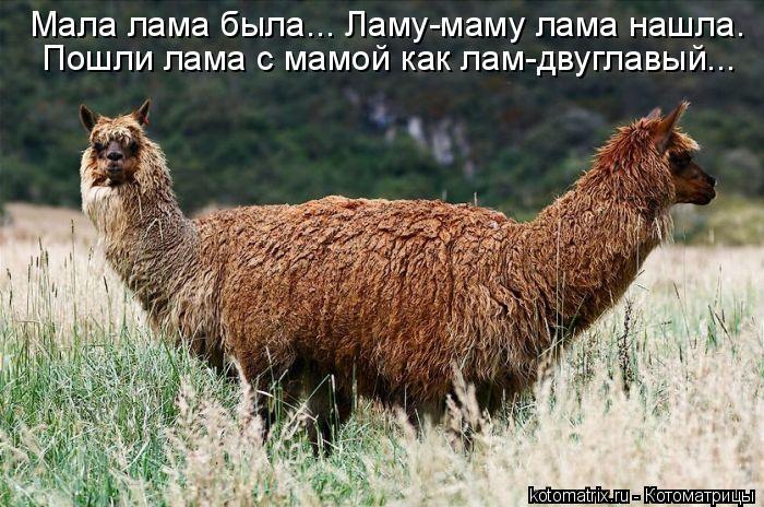 Котоматрица: Мала лама была... Ламу-маму лама нашла. Пошли лама с мамой как лам-двуглавый...